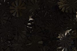 11 ágú virág fekete