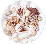 Kagyló gyöngyök
